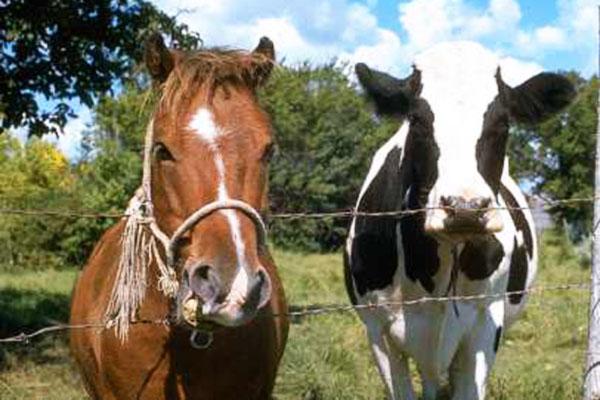 ВКузбассе цыганка «вылечила» пенсионерку за185 000 руб. икупила себе коня